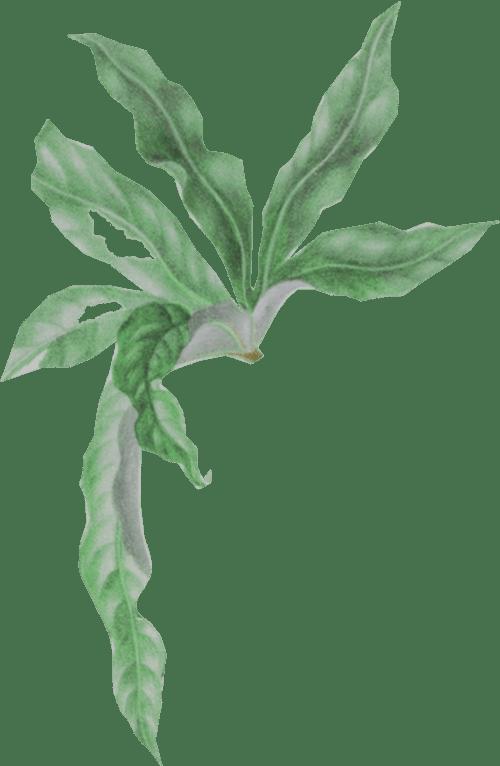MaroVerlag – Die Chamäleondamen Roman von Yvonne Hergane